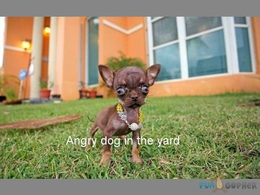 Angry Animals Google Search: 141 Best Funny Angry Animals Images On Pinterest