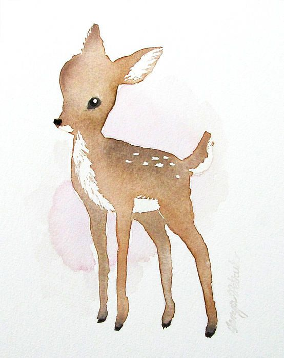 watercolour painting of baby deer (fawn)