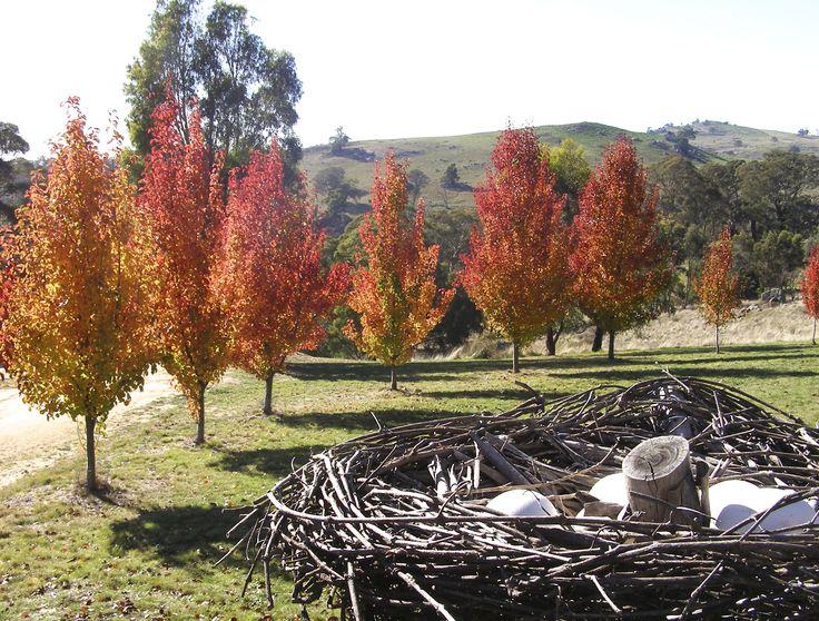 Chanticleer in Autumn at Mica Grange