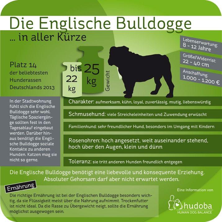 Englische Bulldogge Ein Lamm Im Wolfspelz Bulldogge Franzosische Bulldogge Franzosiche Bulldogge