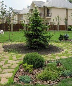 Особенности хвойных растений на дачном участке. Ель в ландшафтном дизайне
