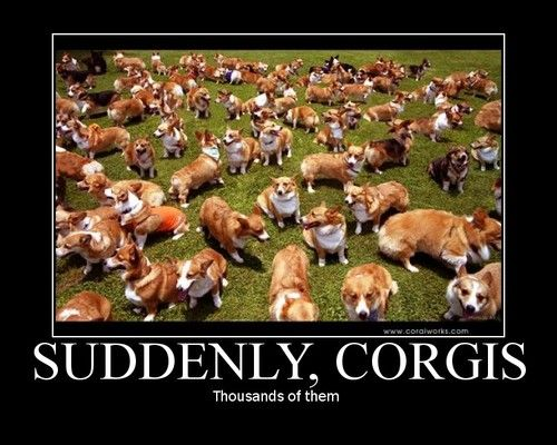 Out of nowhere, corgis!Dogs, Corgis Funny, Funny Pictures, Welsh Corgis, Dreams Come True, Welshcorgi, Baby Girls, Heavens, Animal