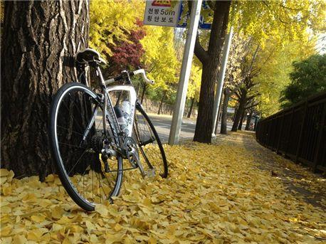 bike- yellow