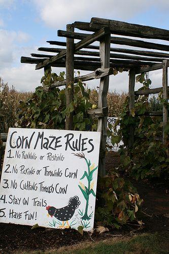 Corn Maze | Kids Love... | Pinterest | Maze