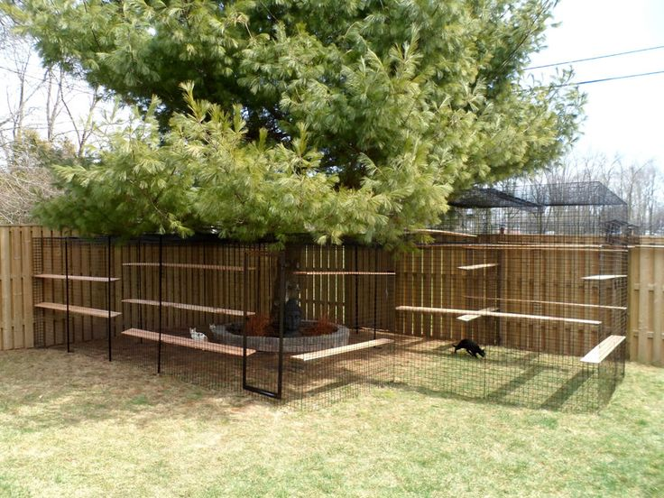 1000 ideas about dog enclosures on pinterest outdoor for Dog fence enclosure