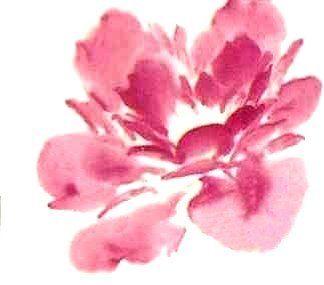 Le pivoine en peinture chinoise xieyi, la fleur étape 2
