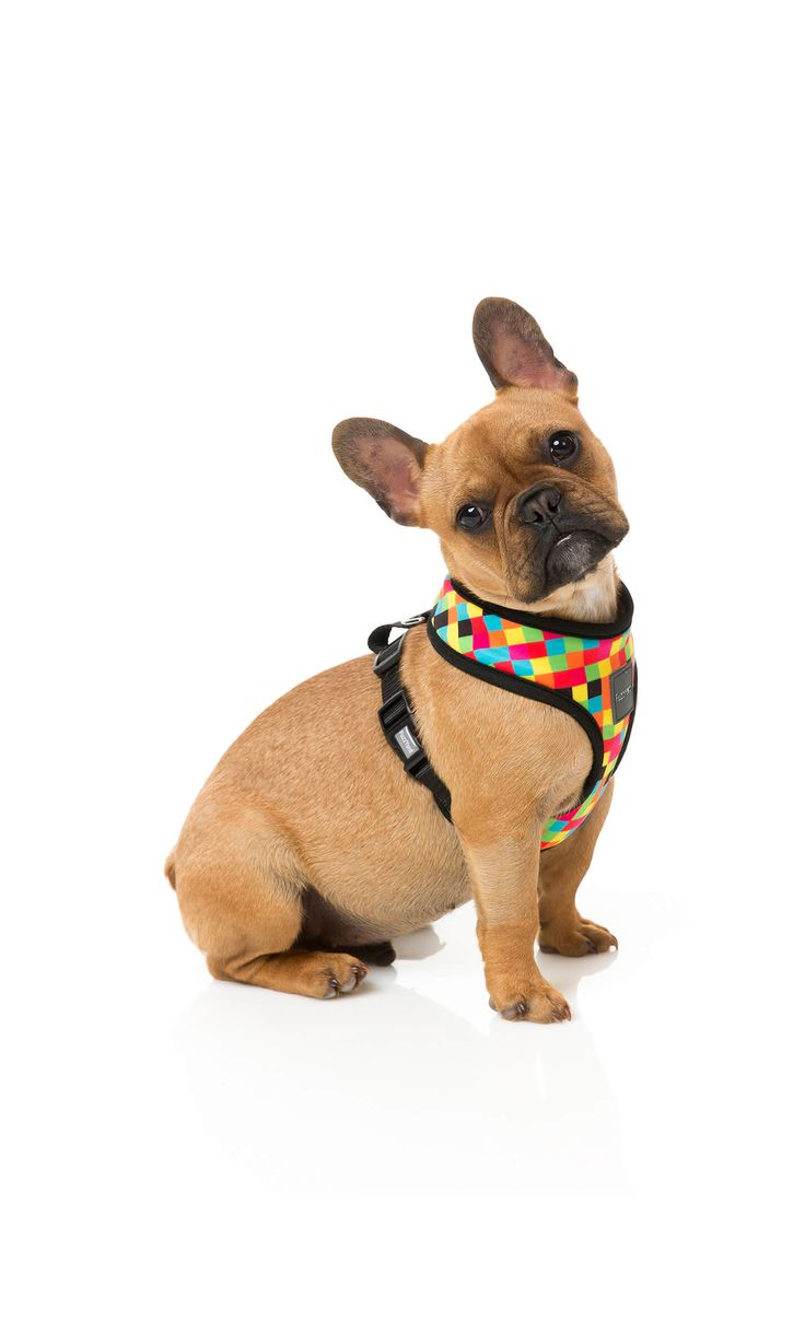 Arnes de diseño para perros