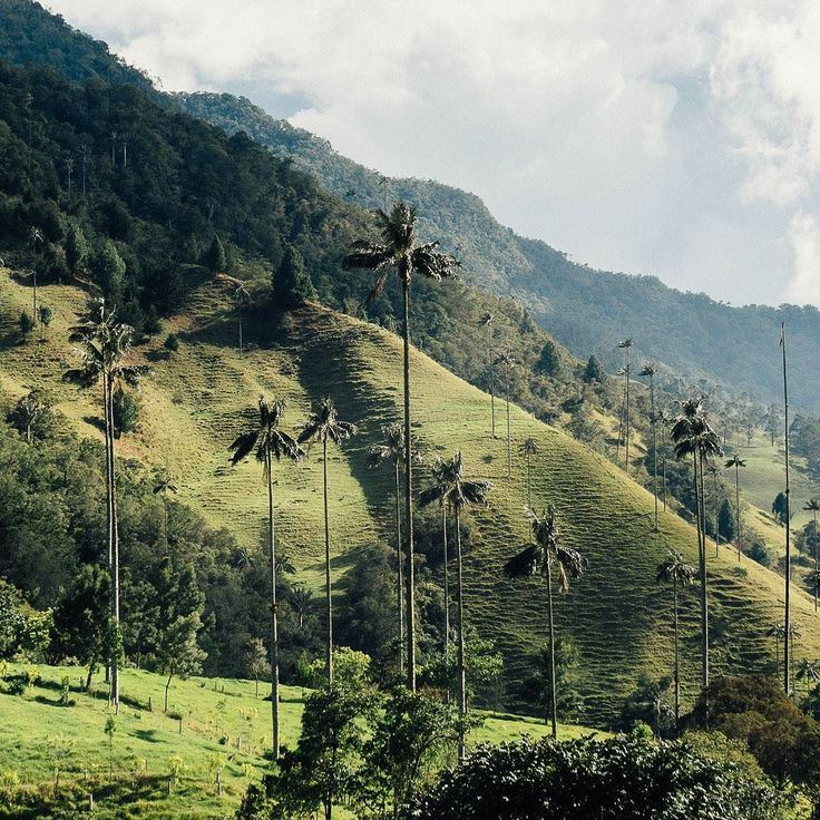 Isn't it time you stopped making excuses and got out there on the open road? Tag someone you'd love to travel here with... Hanging out below the slender towering wax palms near Salento Colombia -- part of Los Nevados National Park. The palms sit at around 2000 meters above sea level not your typical beach side palm tree...