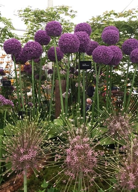 RHS Chelsea Flower Show 2015. For more ideas of what to do in London visit Redonline.co.uk