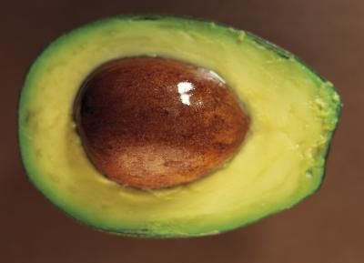 how to grow an avacado plant from seed