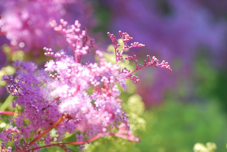 In the Pink | by littlekiss☆