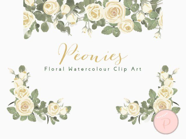 WCA79-ivory-peonies-floral-cliparts