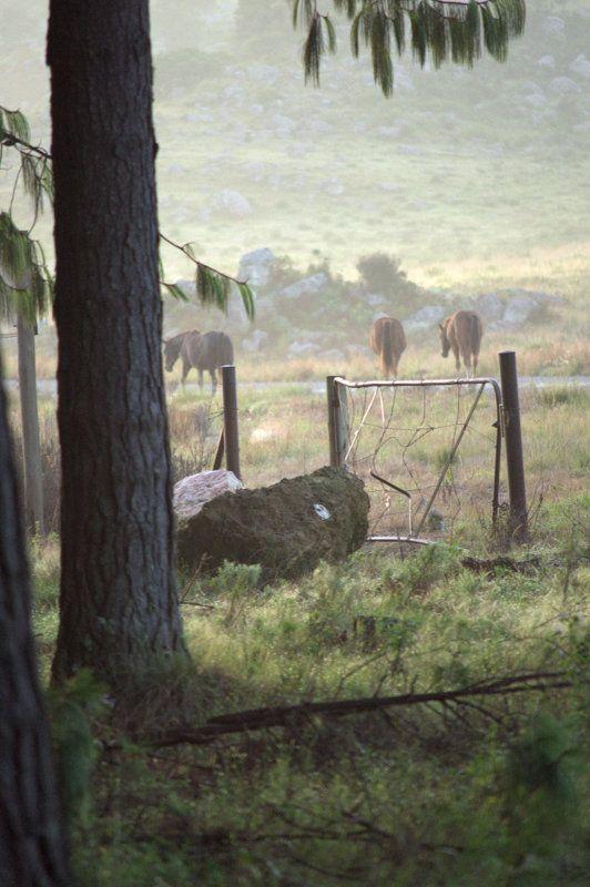 Wild horses, Kaapschehoop