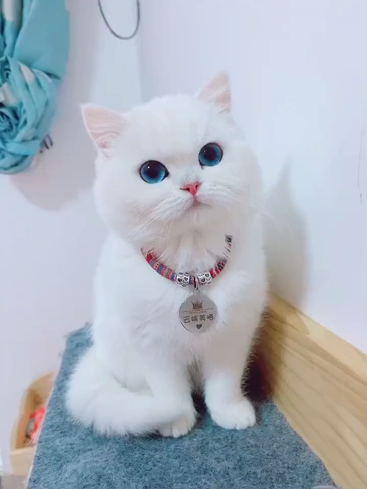 what a lovely cat!!