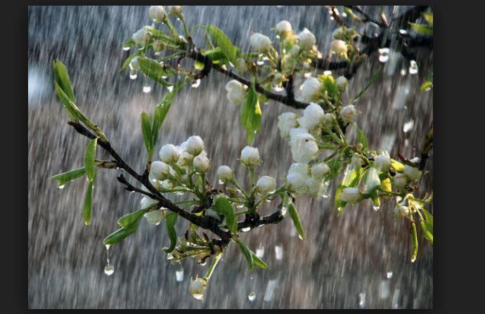 دعاء المطر اللهم صيبا نافعا الدعاء المستحب عند نزول المطر China Rain Spring Rain Rain Wallpapers
