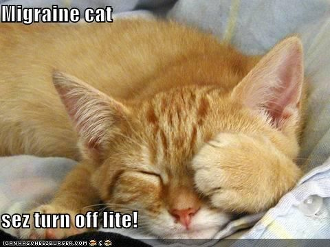 a38c639b3a737aac97ef8c39a14df0dd chronic migraines chronic illness 227 best migraines images on pinterest chronic pain, chronic,Chronic Illness Cat Meme
