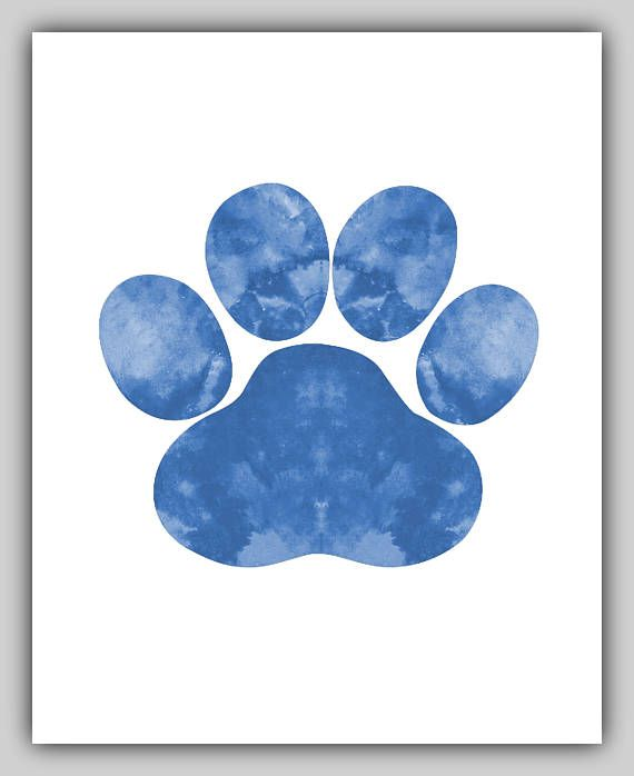 Dog Paw Print Prints Blue watercolor abstract for kids