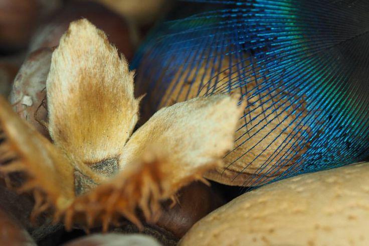 #almonds, #peacockfeather, #autumn