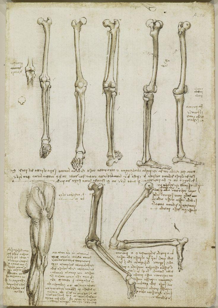 16 best Anatomie images on Pinterest | Human anatomy, Human body ...