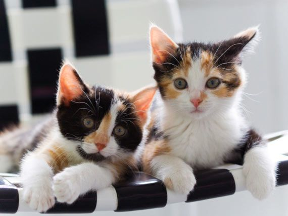Can Sounds Cause Seizures In Cats