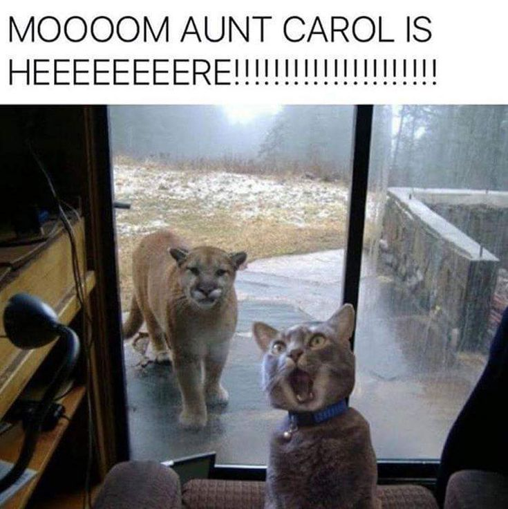 Apparently Aunt Carol is a cougar.
