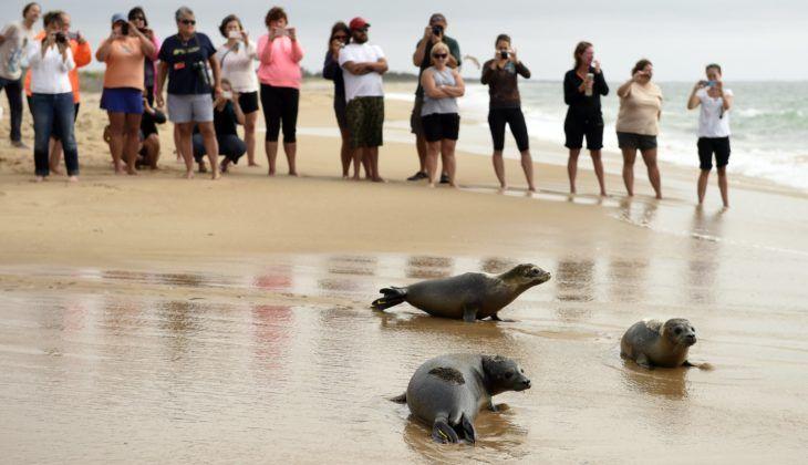 mystic aquarium seal release