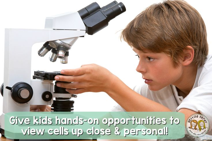 List of hands-on activities for teaching cells!