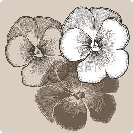 Flor del pensamiento dibujo a mano Ilustraci n del vector  Foto de archivo