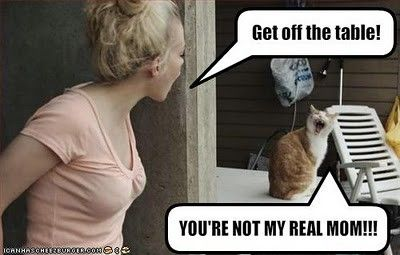 ha:)Realmom, Funny Cat, Make Me Laugh, Funny Stuff, Humor, Real Mom, So Funny, Kitty, Giggles