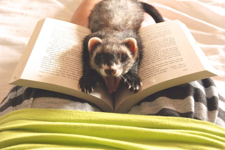 The Book Ferret at his finest.