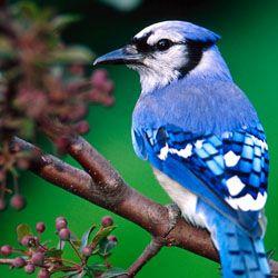Escucha sonidos de pájaros y relájate en la oficina - http://www.entuespacio.com/escucha-sonidos-de-pajaros-y-relajate-en-la-oficina/