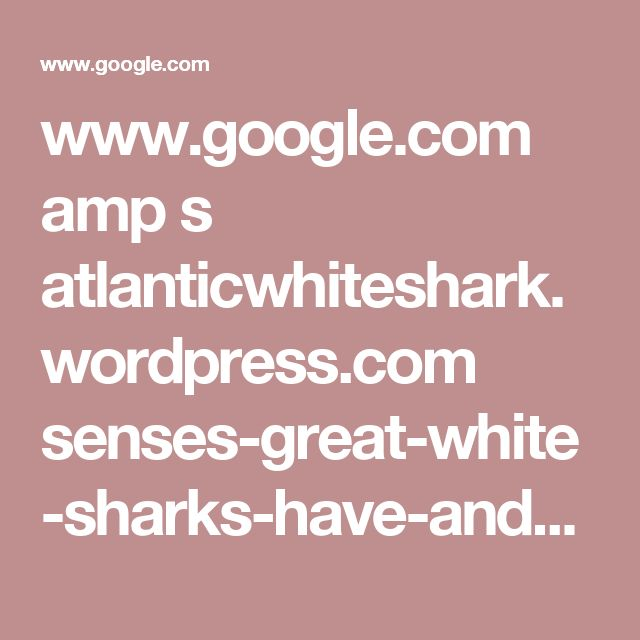www.google.com amp s atlanticwhiteshark.wordpress.com senses-great-white-sharks-have-and-humans-dont // I guess it's not their brain...it's their sensory organs that's evolved. Their sensitivity to electric fields is what I was thinking of. Different species adapt different ways to survive but these suckers been swimming around the sea for forever...