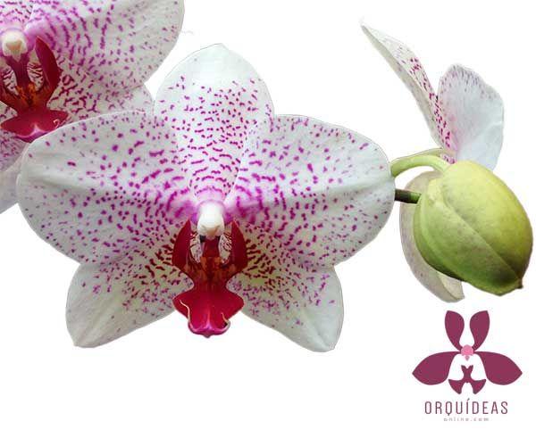 Orquídeas Online