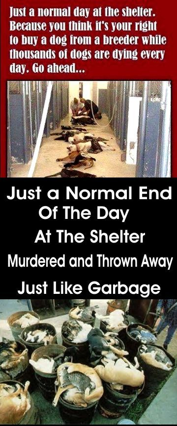 Just a normal day at the Shelter. Please, rescue animals from shelters and spay and neuter your pets.: