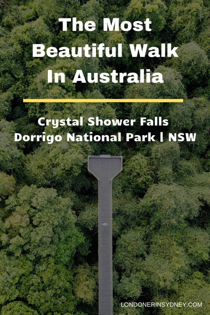 10 reasons to do the Crystal Shower Falls Walk in Dorrigo National Park