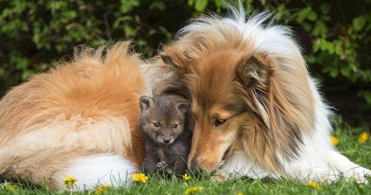 Er sah zu wie seine Mutter starb. Unglaublich, was dieser Hund mit ihm anschließend gemacht hat.