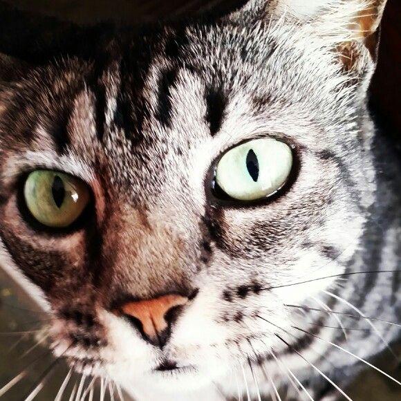 #cats #closeup