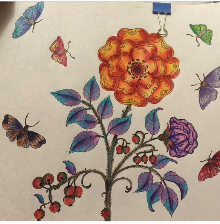 Johanna Basford Secret Garden Pictures Coloring Books Butterflies Colouring In Vintage Pages