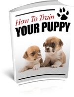 How to Train Your Puppy - Discover how to keep your puppy's behaviour in check and ensure he or she grows into a loving family pet.