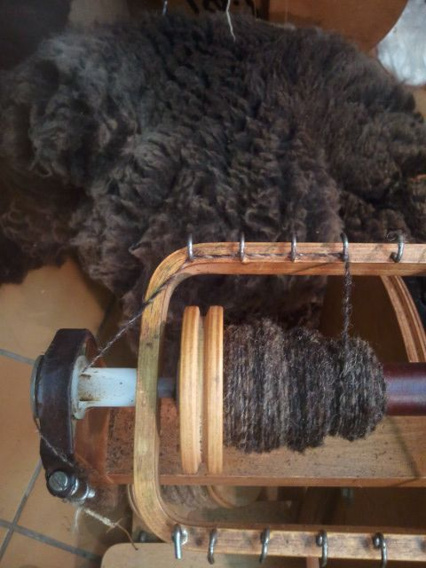 brown gray wool of ouessant sheep shown as fleece and on the bobbin of the spinning wheel. blog in dutch with more photos of wool preparation; http://zuiverscheerwol.wordpress.com/2012/10/20/bruin-grijze-wol-van-het-ouessant-schaap/