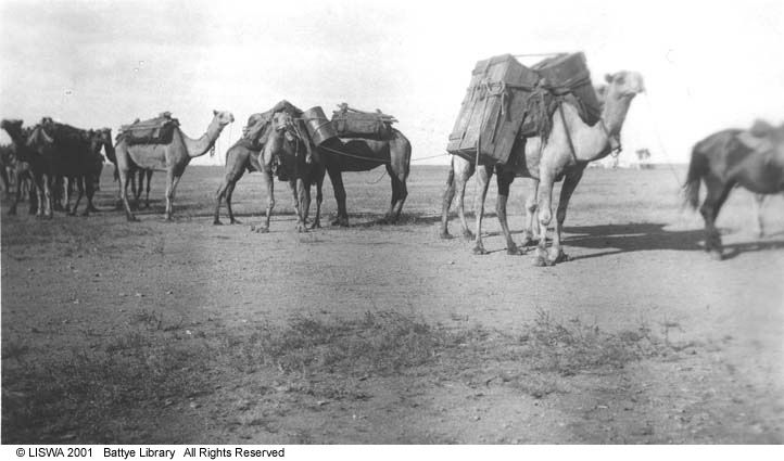 1000 images about western australia australia on for Camel motors on park and ajo