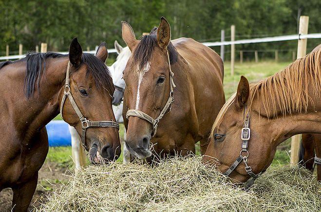 Salon Ratsastuskeskus Merlitz - katso ratsastuspakettimme http://fjalar.fi/ratsastus_ja_golf_Salossa