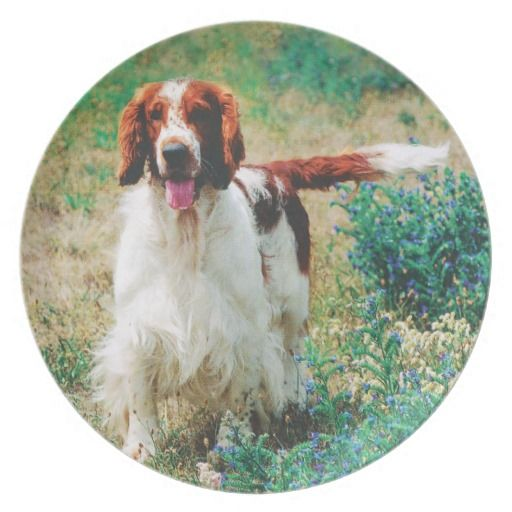 Welsh Springer Spaniel Melamine Plate. Perfect for celebrating a special occasion or creating a one-of-a-kind dining set, our non-toxic and dishwasher-safe plates.