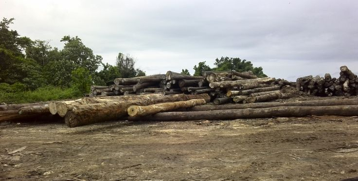 A pile of logs waiting for export