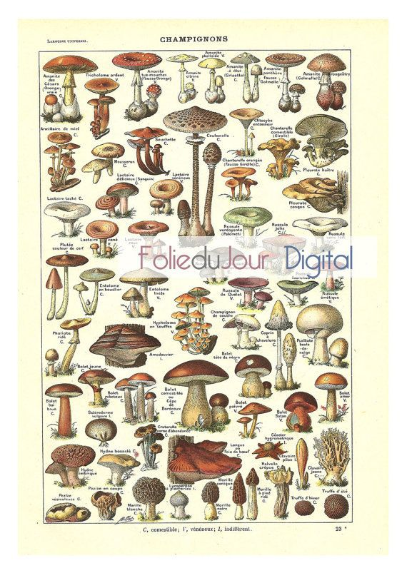 Mushrooms Digital file French vintage dictionary by FolieduJour