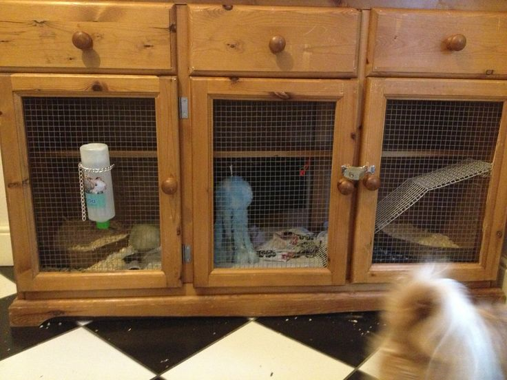 79 best images about ferrets on pinterest jungle gym for How to make a rabbit hutch from scratch