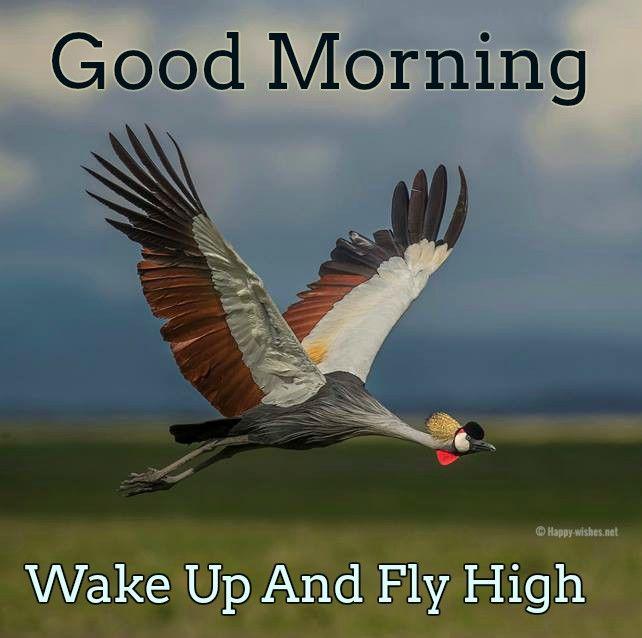 Good Morning Bird Images Good Morning Good Morning Happy
