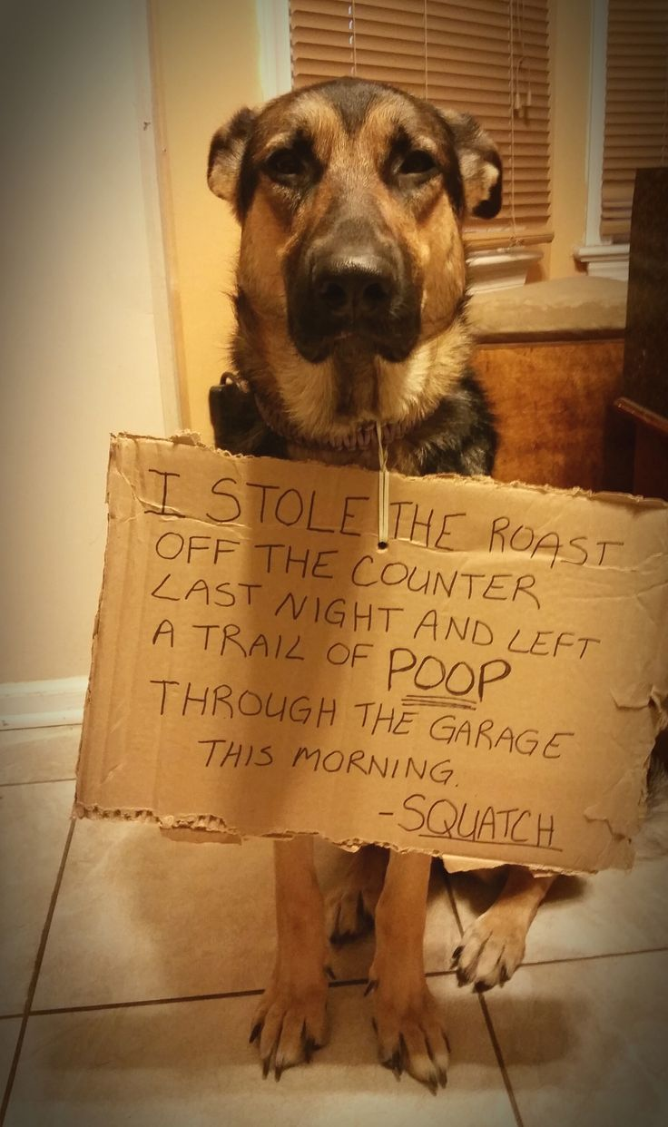 4539 Best Images About Dog Shame On Pinterest To Pee My