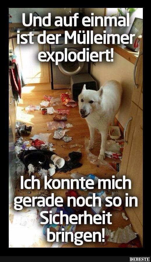 Und auf einmal ist der Mülleimer explodiert!..