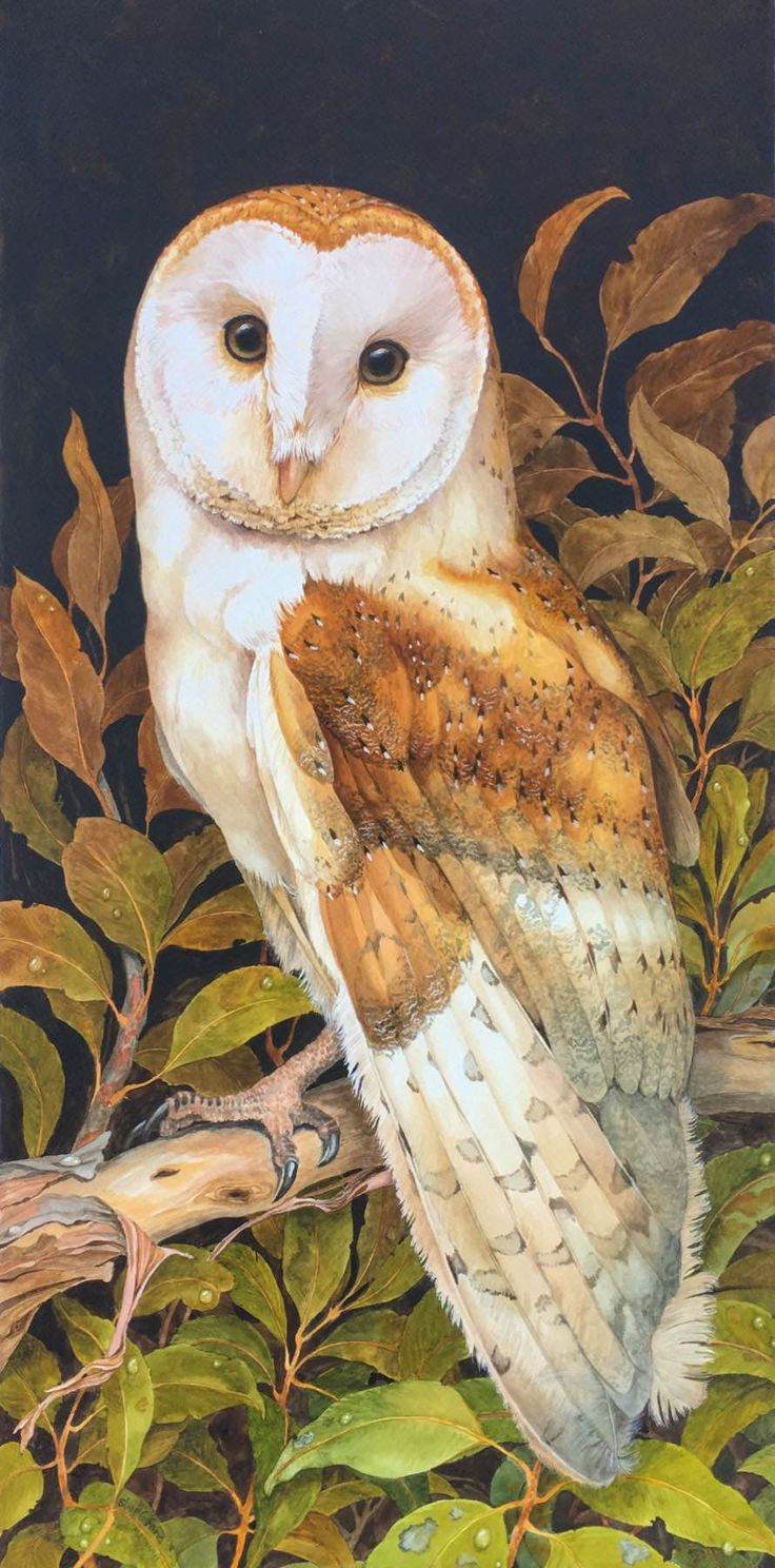 BLACKHEARTH EVENING BARN OWL BY JANE STAPLEFORD Barn owl